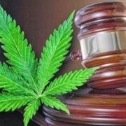 marijuana leaf with gavel